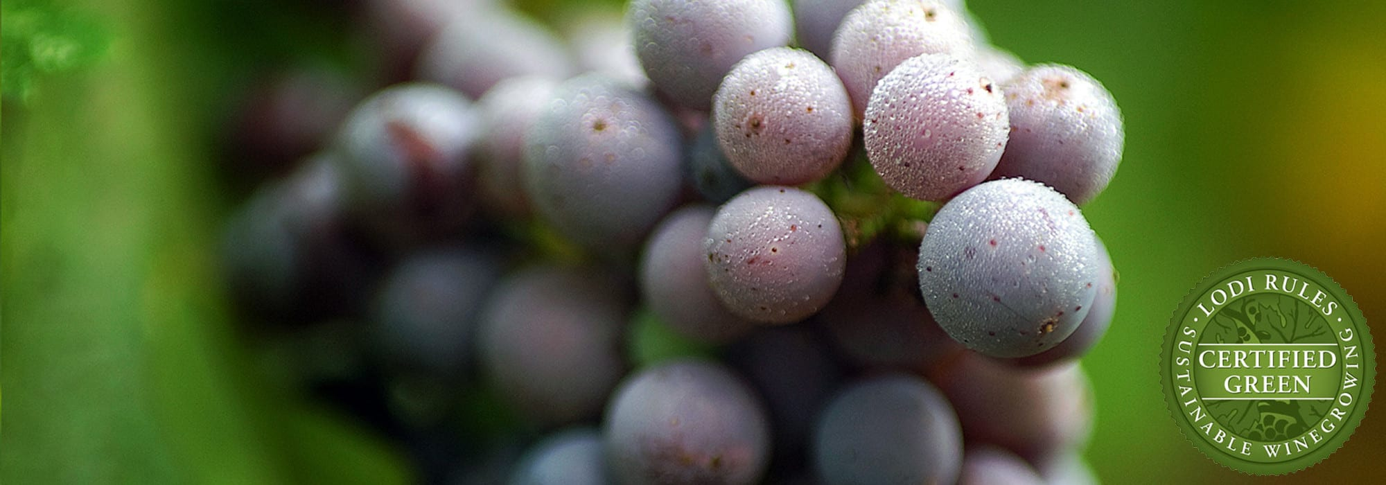 native american wine